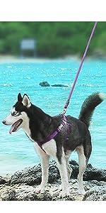 ComfortPro Dog Harness Lead Set