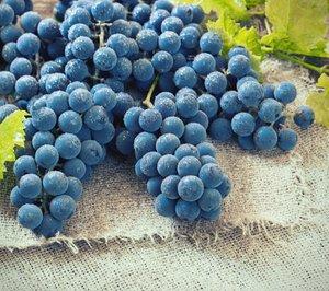 Organic Whole Food Multivitamin Uk