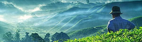 valley of tea loose leaf tea oolong black white green pu-erh herbal teas