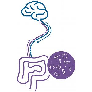 Zenflore Gut Brain Axis