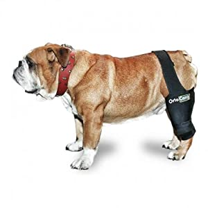 Dog ACL, dog with patella luxation, dog limping, dog with arthrosis, dog ACL operation