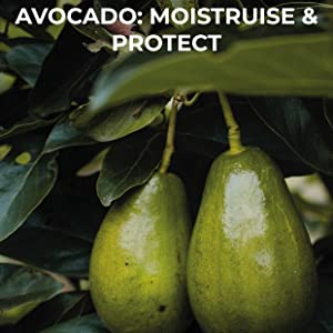 Avocado Oil- Mens Face Wash Ingredient