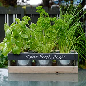 Personalise your Herbs at home kit
