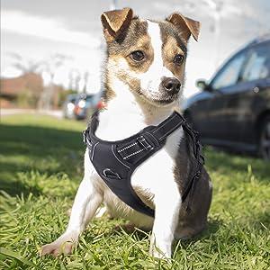 KZs8F2XoSOe3._UX300_TTW__ rabbitgoo adjustable refletive dog harness outdoor pet vest with dog harness at eliteediting.co