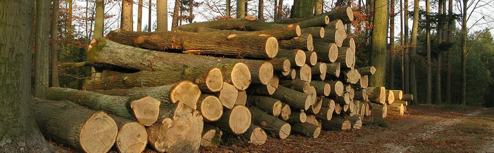 Fsc Forestry, Lumberjack, Firewood source.