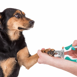 dog nail clippers small to medium