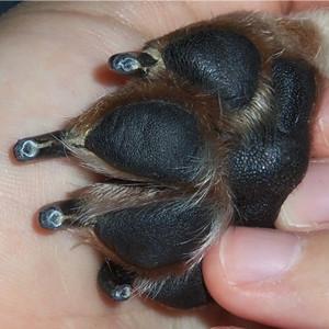 dog nail clippers heavy duty