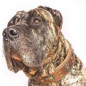 Bestia Collier pour chien Motif aztèque Marron
