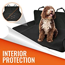 INTERIOR PROTECTION GRAPHIC WITH DOG