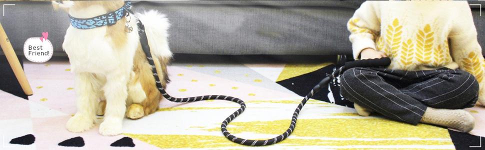 black dog leash