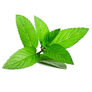 ginger root peppermint extract