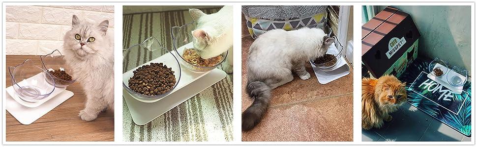 Double Bowl Cat Feeder