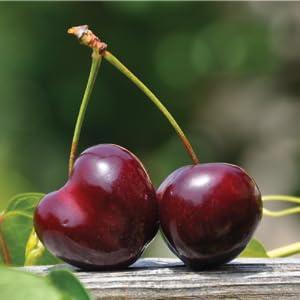 cherry supplement