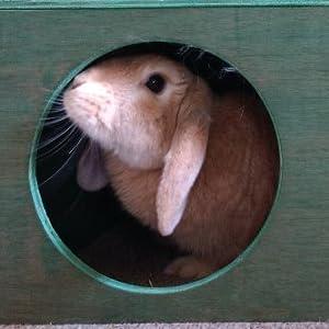 Hop Inn Rabbits