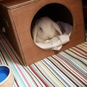 Rabbits and Cats Hop Inn