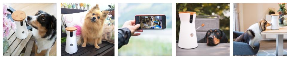 Furbo, Dog Camera, Pet Camera, Pet Tech, Treat Tossing, Dogs, Pet, Hundekamera, Haustier, Hund