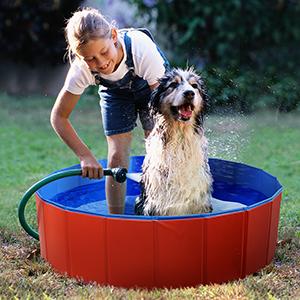 dog padding pool