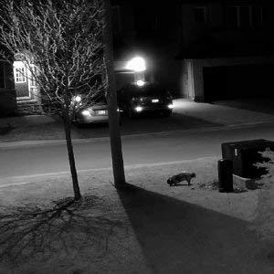 Reolink Poe Ip Camera 5mp Super Hd Home Security Camera