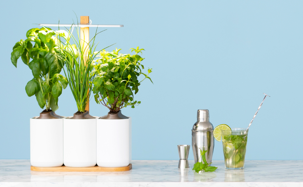 Prêt à Pousser Lilo, your Indoor Garden ❃ Grow your own fresh herbs at  home, effortlessly and year-round ❃ Including Basil, Mint and Chives