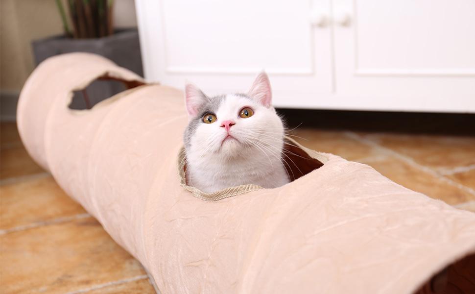 PAWZ Road cat tunnel