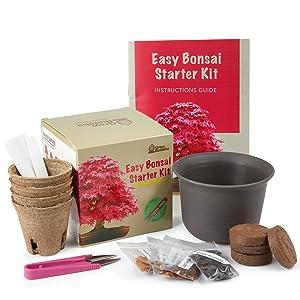 wachsen Sie Ihre eigenen Bonsai Baum Blumensamen Geburtstagsgeschenke