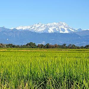 Anbau Reisfelder