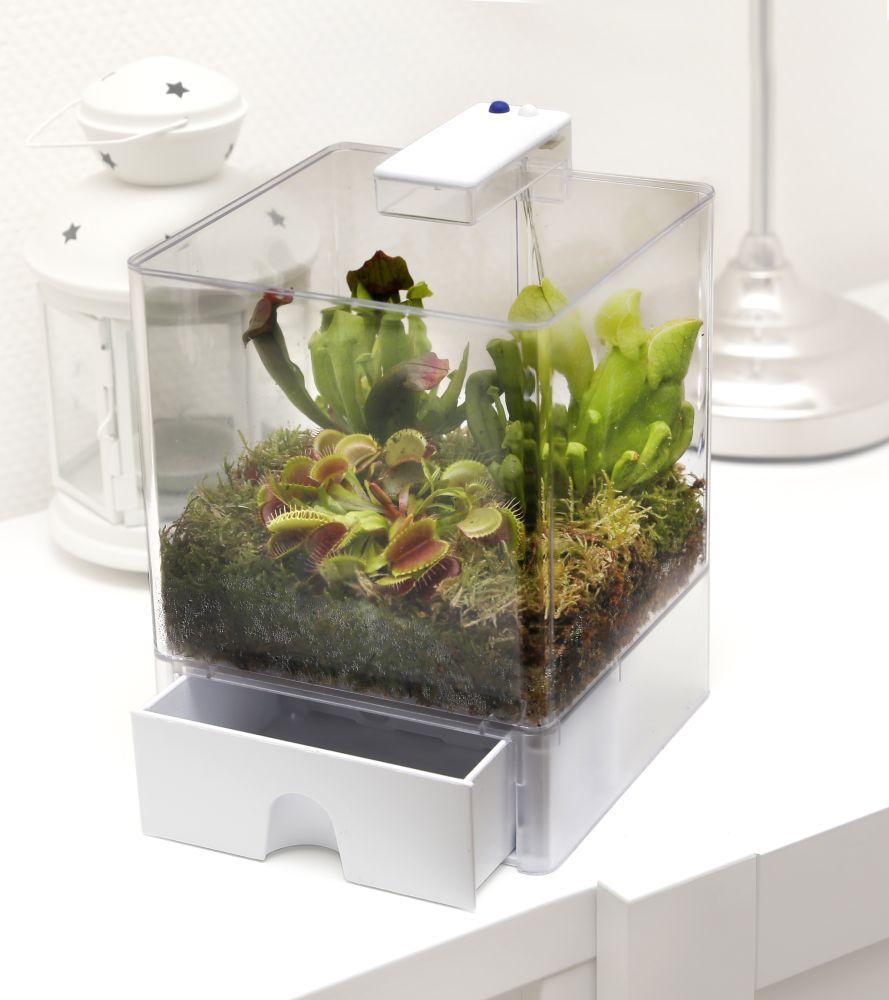 swampworld terrarium 2 farben beleuchtung 3 fleischfressende pflanzen k che. Black Bedroom Furniture Sets. Home Design Ideas