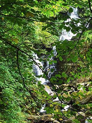 Wald Ursprung Speisepilze Vielfalt Inspiration PilzWald DIY Sets Kits Pilzbrut Impfdübel