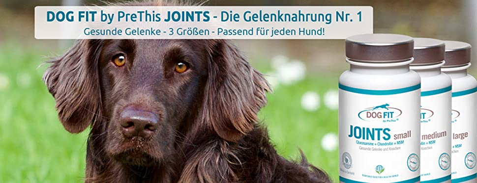 Was bringt Grünlippmuschel für Hunde wirklich?