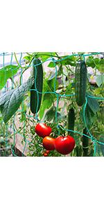 Ontbijtend net op het gebied van planten en groenten.
