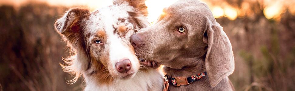Freudentier® Hundehalsband & Hundeleine (2m) im Set   Inkl