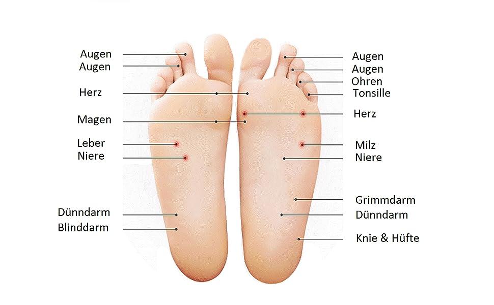 Ausgezeichnet Lage Von Leber Und Nieren Zeitgenössisch - Anatomie ...