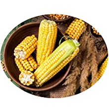Vegane BCAAs hergestellt aus non GMO Mais mit sensationellem Geschmack und Löslichkeit