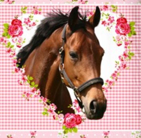 aminata kids s e m dchen kinder bettw sche 135x200 pferde motiv mit herz rose hochwertige. Black Bedroom Furniture Sets. Home Design Ideas