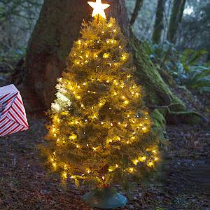 lichterkette Weihnachten