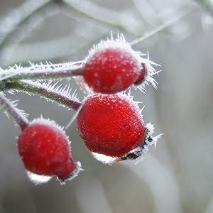 dreikraut-Bio-Hagebutten-Pulver-wildsammlung-früchte-vitamine-winter