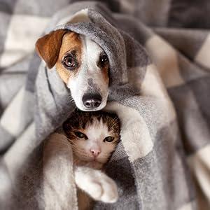 Vita Natura Ulmenrinde hilft Hund und Katze