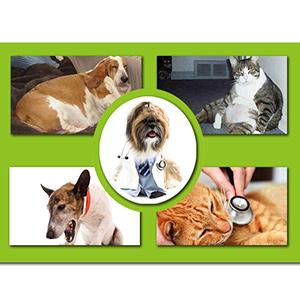 La obesidad también representa un riesgo para la salud de las mascotas, ya que su cuerpo de sobrepeso les impide moverse libremente y copular.