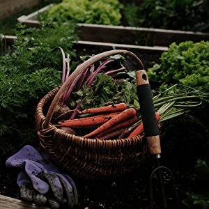 agricultura organica, vegan, cannabis medicinal