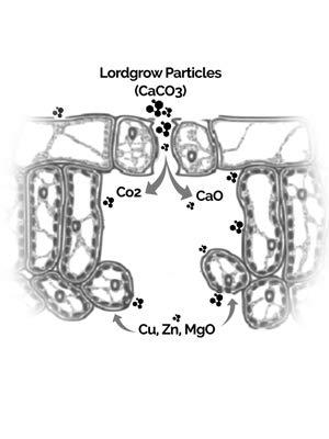 Absorción de nano y micro partículas en la hoja