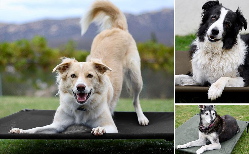 Mantenga a su mascota saludable, segura y cómoda con la cama elevada para perros Veehoo.