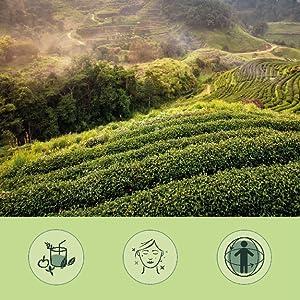 Extracto de Té Verde + Vitamina C Vegavero® | 1300 mg | 120 Cápsulas | Quemagrasas + Diurético + Antioxidante | Vegano