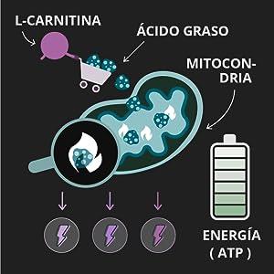 L-Carnitina PURA 99% Vegavero® SPORT 1000 mg | TESTADA | Energía + Rendimiento + Quemagrasas Potente Para Adelgazar | 120 Cápsulas | Tartrato | ...