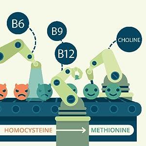 Vitamina B12 PLUS Vegavero® | SIN ADITIVOS | Las 2 Formas Activas + Ácido Fólico + B6 + Colina | Vegana | Energía + Fatiga + Vitaminas Para el ...