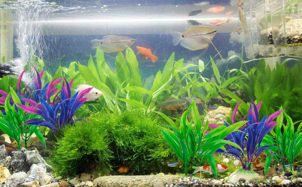 Paisaje de acuario animado de plantas de simulación animada