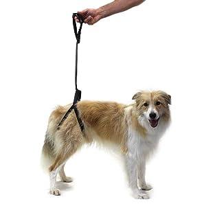 perro con artrosis, perro que no camina, perro con displasia de cadera