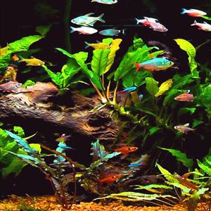 Aquí hay algunos consejos para disminuir el crecimiento de algas