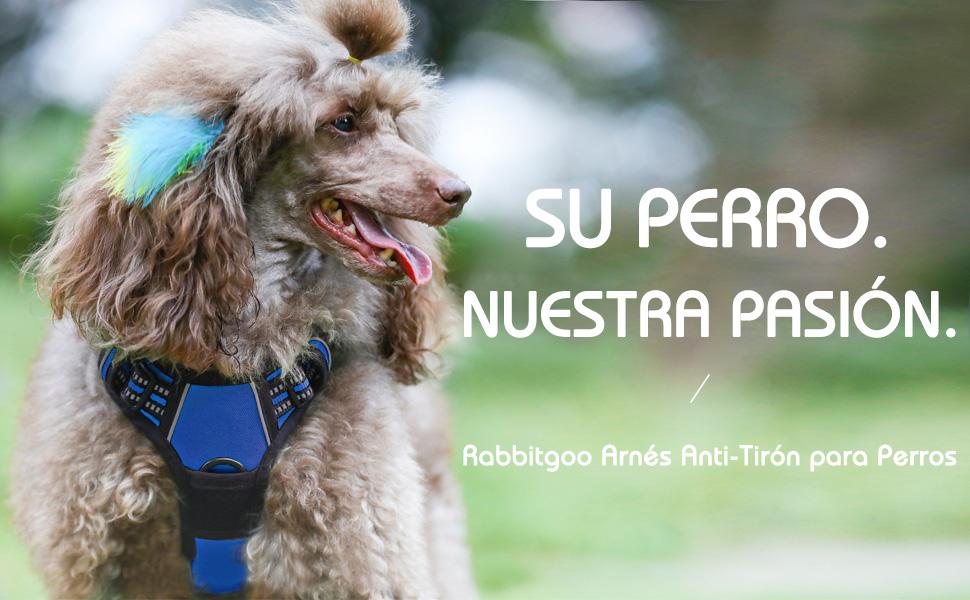 Rabbitgoo Arnés para Perro Pequeño Arnes Antitirones Perro Lineas ...