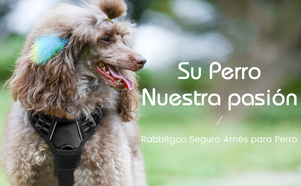 Rabbitgoo Arnes Perro Grande Mediano Pequeño Arnés Pecho ...