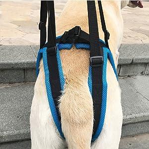 KOBWA - Arnés de elevación para Perro para Ayudar a la Cadera y la ...
